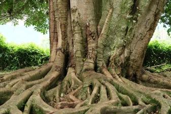 Baum nahe der Ujarraz-Ruine.